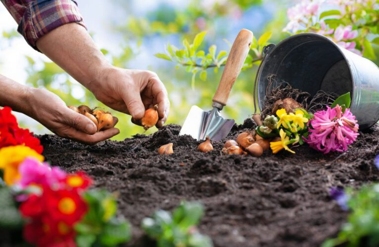 Growing Concerns: Lots to consider when planning spring bulb displays