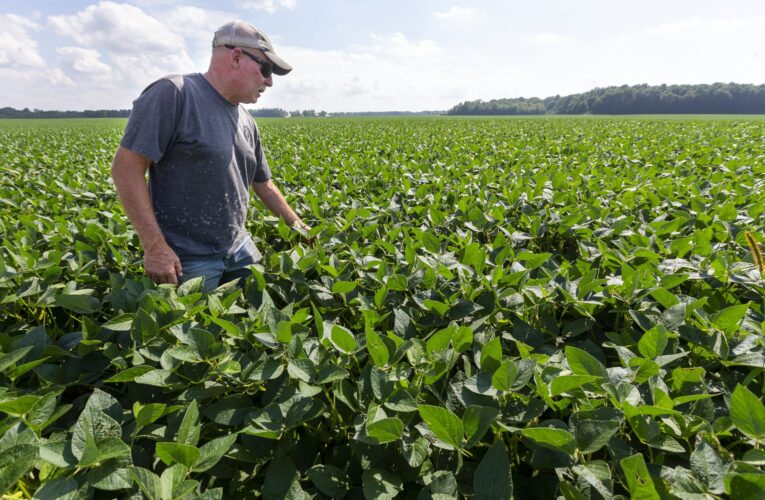 One-two crop woes creating summer stress for area farmers