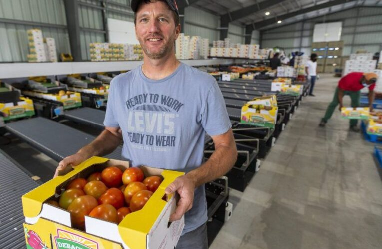 $1M automation system speeds up Elgin County tomato farm